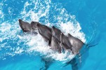 dauphins-marineland